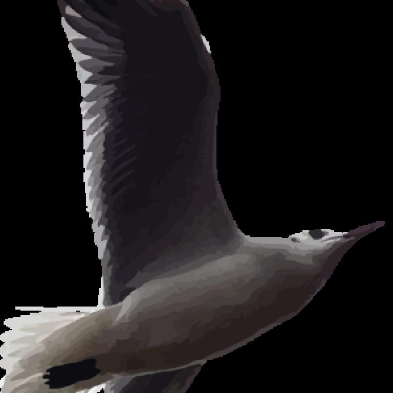 rddbird